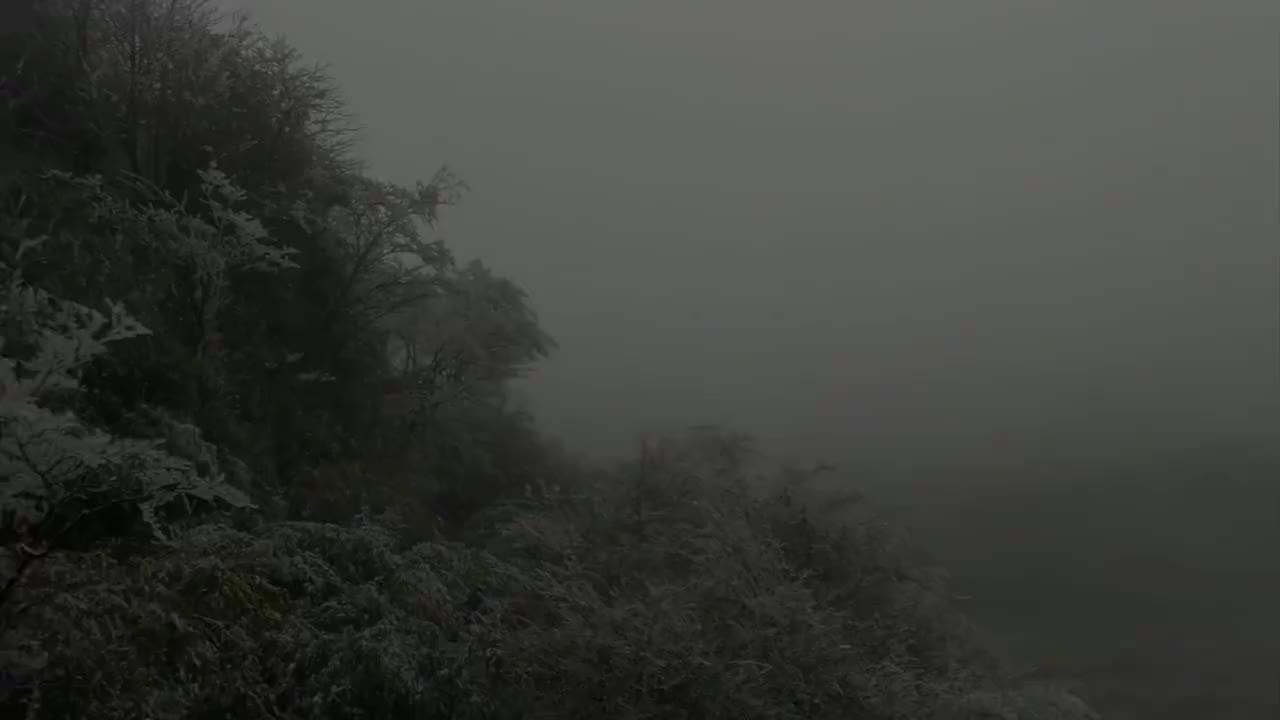 不用去东北!重庆有雾凇美景似仙境