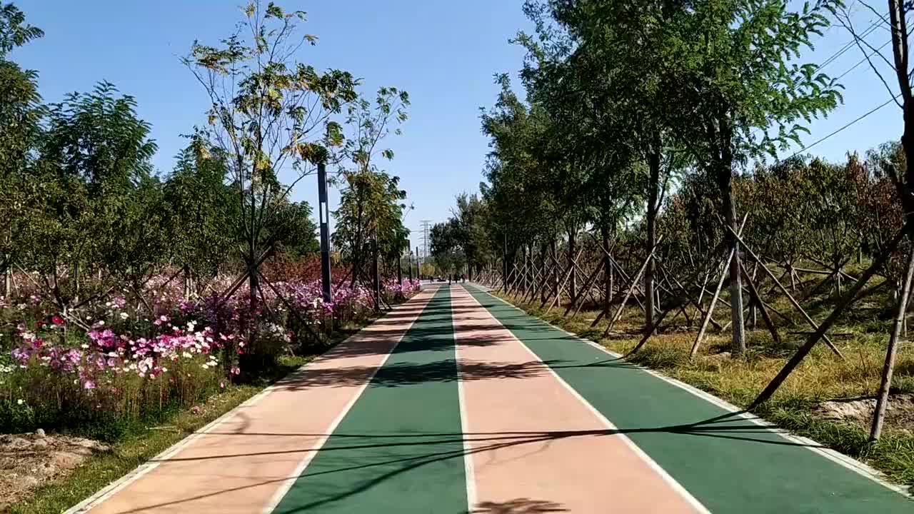 北京南城最大的森林公园,成片的波斯菊花海,知道的人却很少