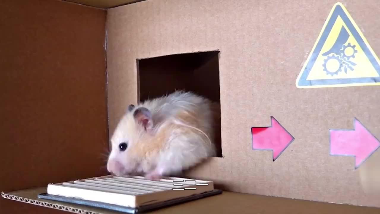 仓鼠迷宫大闯关,九九八十一难,它能走到最后吗