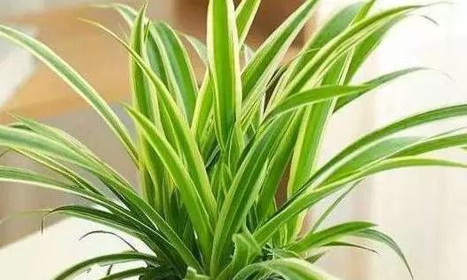 """3种植物特能吸油烟,厨房养盆栽,怎能少得了""""它们"""""""