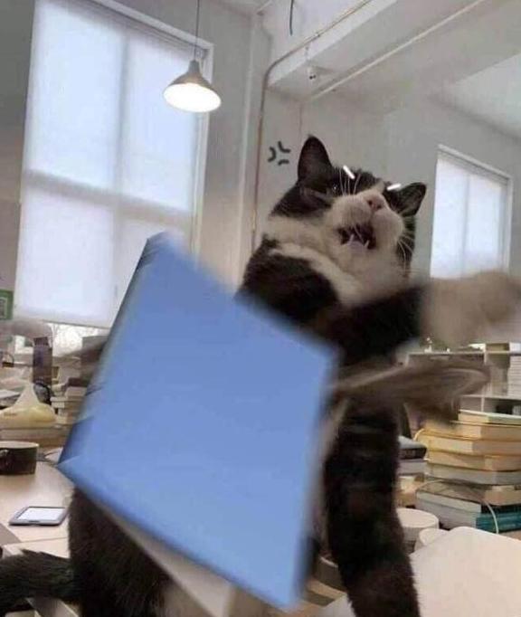为什么有些宠物猫会攻击人?学会这几招让你轻松搞定小凶猫!