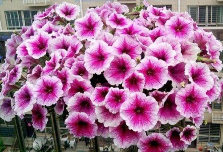4种花漂亮又好养,比牡丹好看,比吊兰好养,你养了吗?