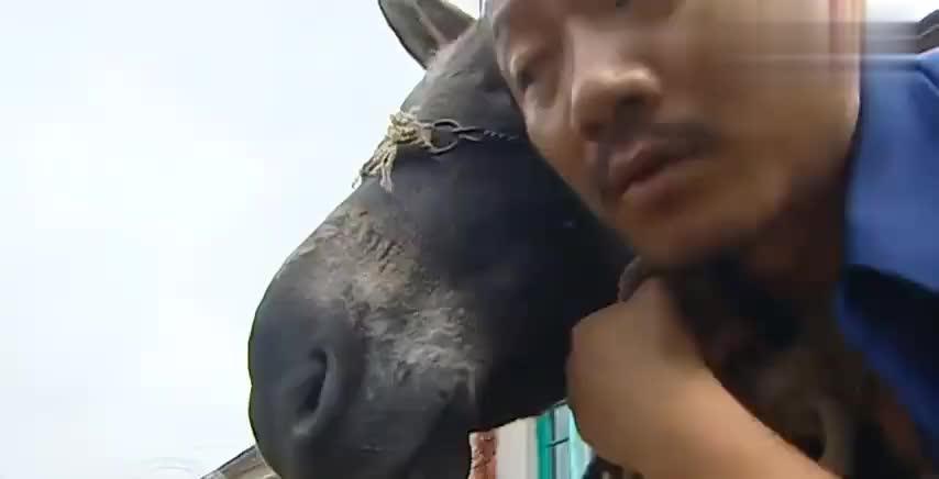 谢广坤听说驴叫能治耳聋,在家拽着驴头不松手,老伴气的直抽驴