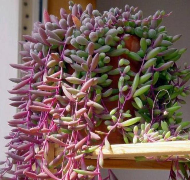 4种花,专吸室内有害气体,10块钱1盆,堪比空气净化器!