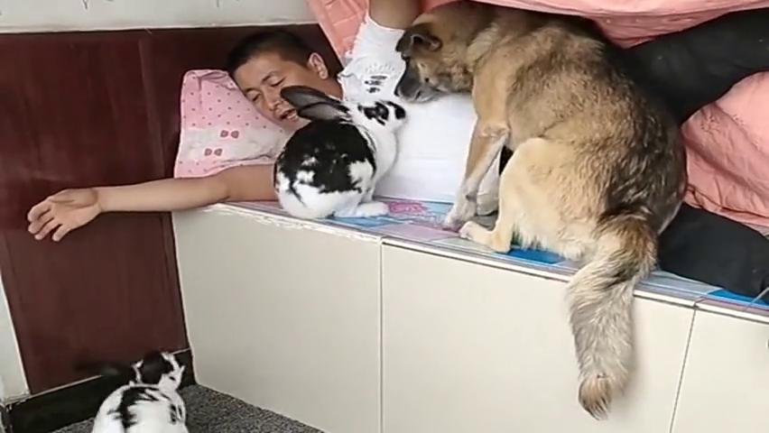 """单身的最高境界,就是和宠物""""同床共枕"""",这大哥可以啊!"""
