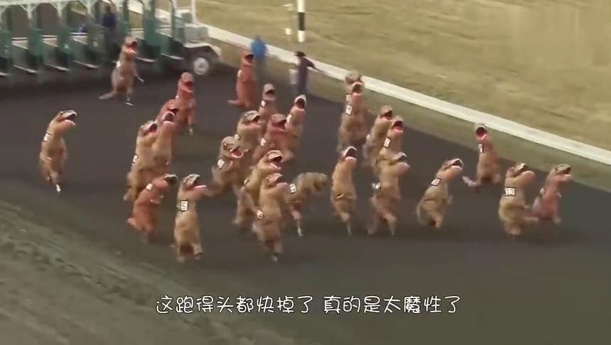 现实版的龟兔赛跑,看完之后才知道,乌龟被冤枉了好多年!