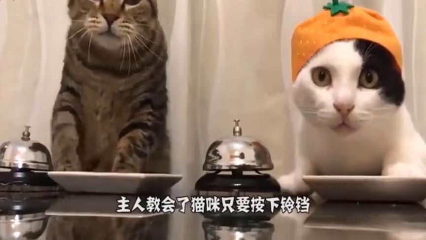 猫咪学会了用铃铛点菜,可以挑自己想吃的,猫粮已经满足不了它了