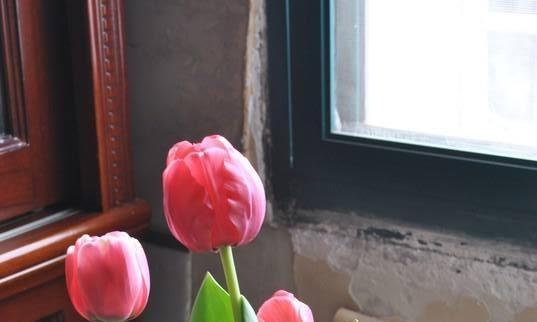 """卧室养""""2种""""花,一身的毛病全来了,人称是""""毒花"""",别忽视"""
