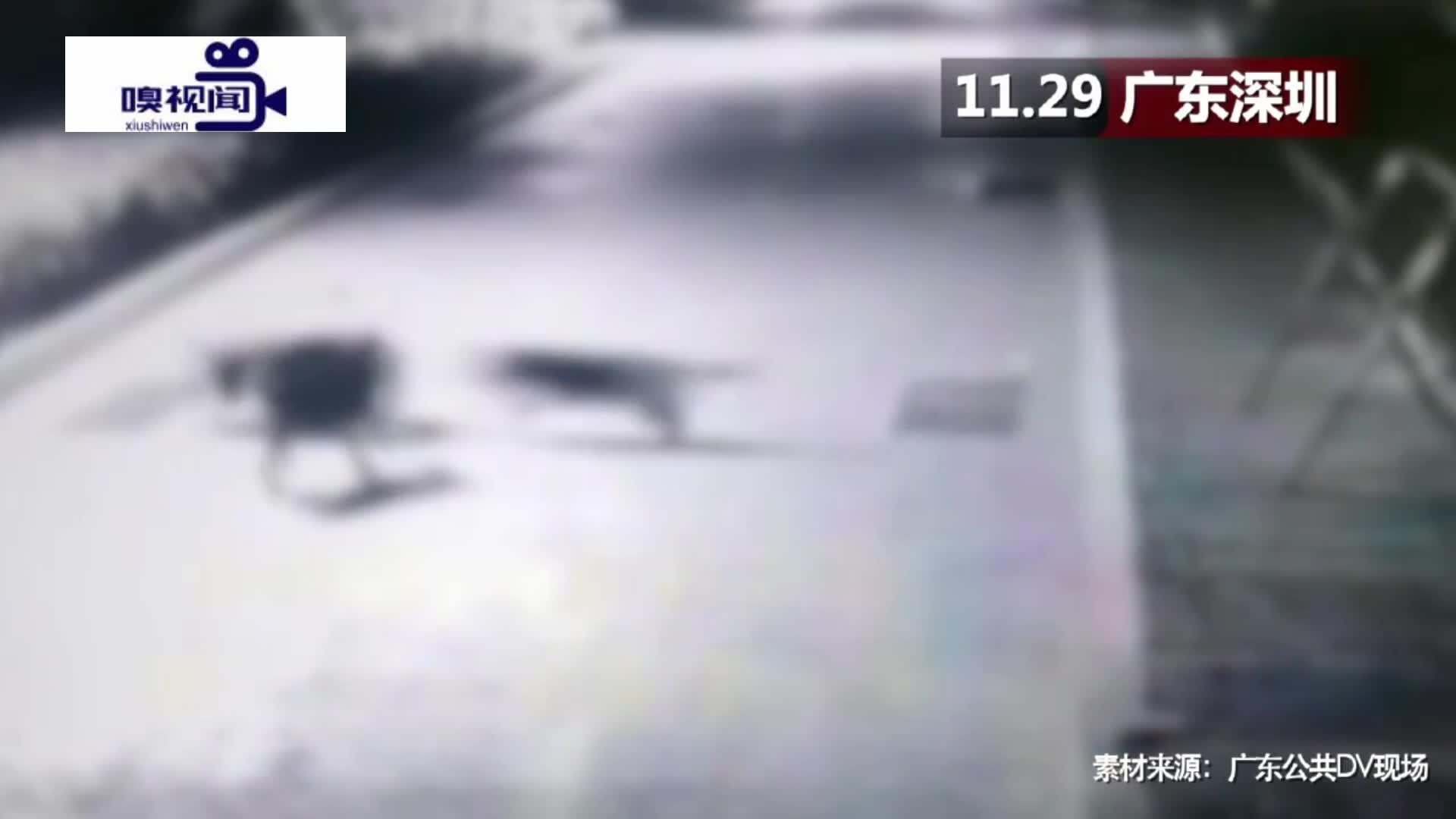 广东深圳:可怕!小区三只大狗出没,家猫遭围攻被当场咬死