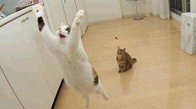 最搞笑的动物摄影师,配上你的图片说明故事居然不一样