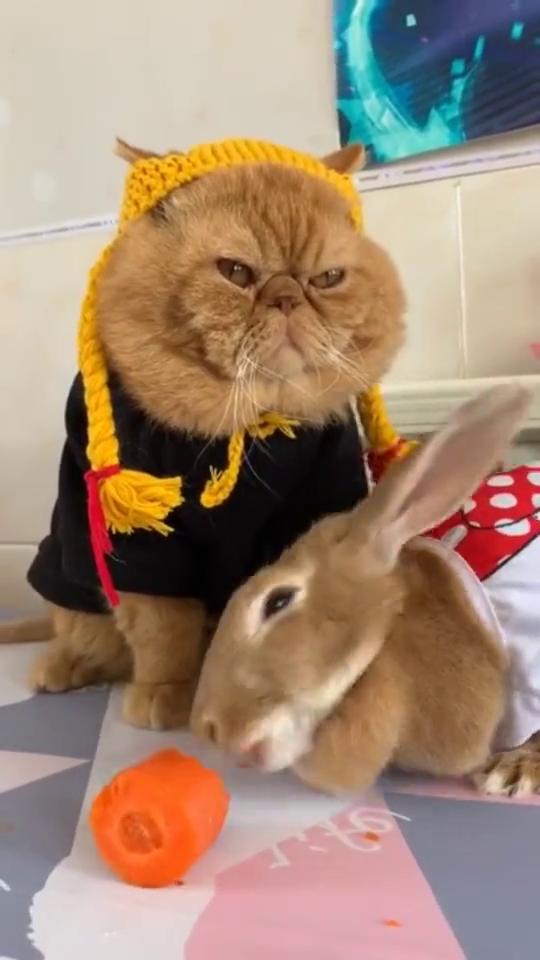世上最和谐的加菲猫和彼得兔,加菲猫的表情亮了:我的鱼呢?