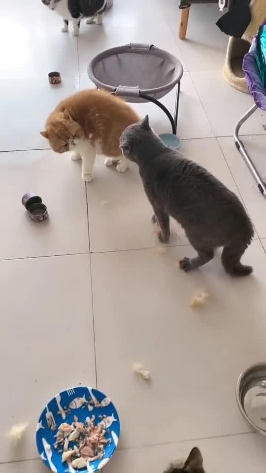 一家不容二猫,不做大哥好多年,没想到一出手还是这么豪横!