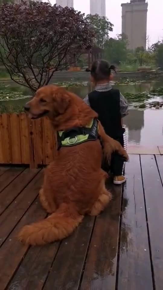 宝宝在水边玩耍,狗狗小心翼翼的保护着她,眼神里满是温柔