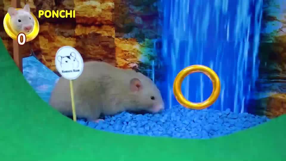 可爱的仓鼠来到刺猬索尼克的迷宫,跑酷仓鼠,感觉比索尼克玩的好