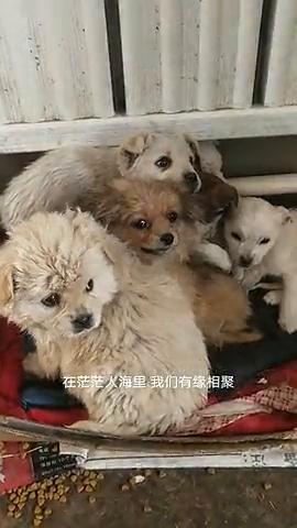 救助站新收留的小狗