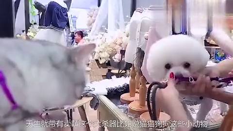 汪苏泷喜提小猫咪,谁注意他为辨别猫咪性别做了什么?吓坏汪涵