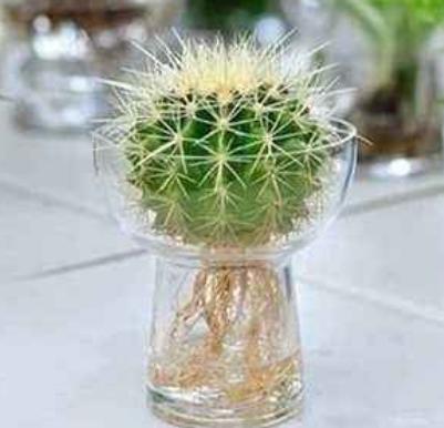 """所有植物皆可水培?一定要记住,里面有""""猫腻"""",要谨防上当"""