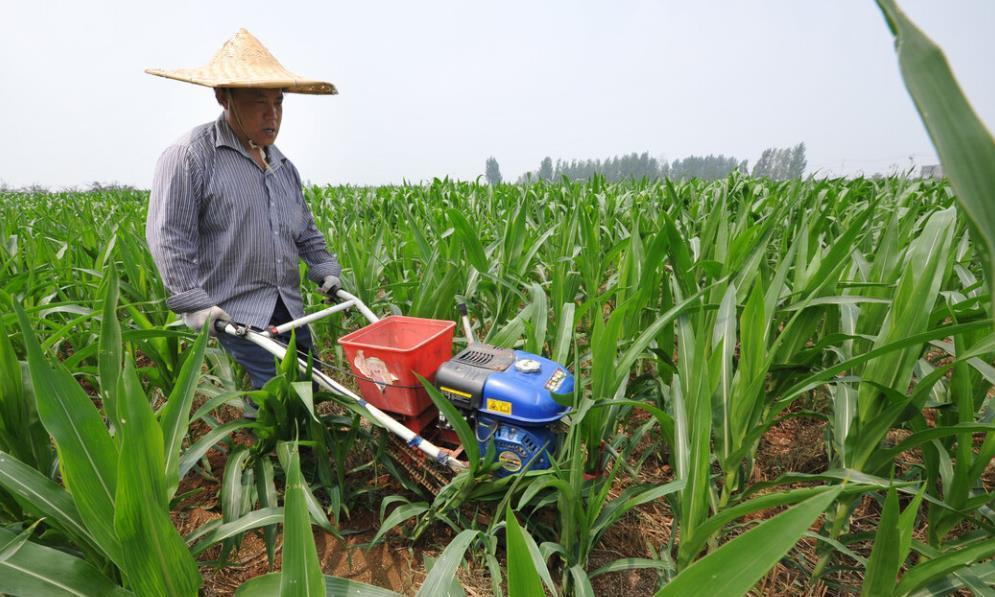 无公害玉米大棚栽培技术,做好全面的控制管理,提高农民的效益