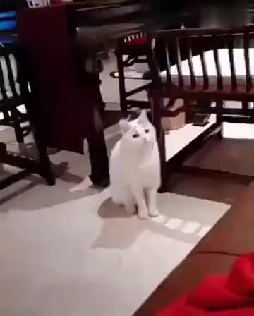 心事重重的猫!!!!