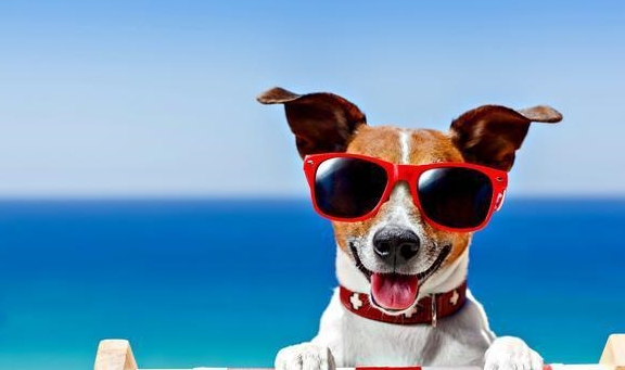 狗狗很容易中暑,但又不想剃毛,怎样让狗狗清凉过夏?