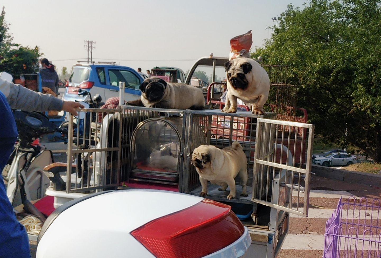 邢台新宠物市场,周末依然繁华