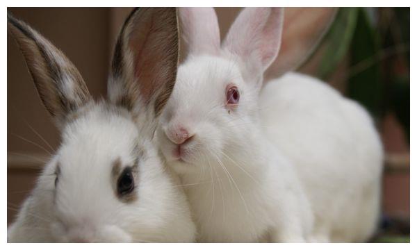生肖属兔的人,2月份做1件事情可以改运,后半生富得流油