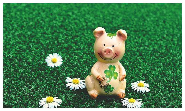 生肖猪2021年运势及运程,属猪人2021全年每月运程