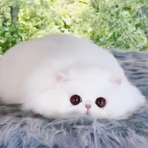 小萌猫也太可爱了,眼睛还可以散发出光芒