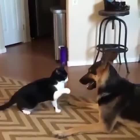 这对猫狗好有爱哦