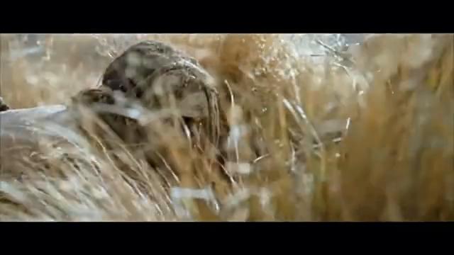 原始人捕杀超级猎物猛犸象
