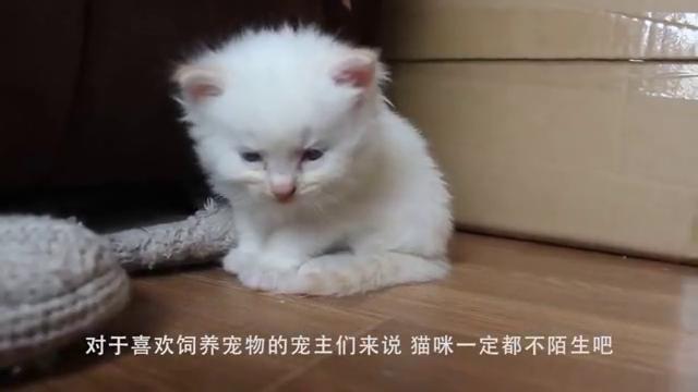 给猫穿上袜子,再把速度放慢10倍,网友:每一步都是大佬的姿态