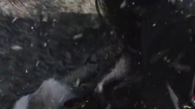 小伙回到河边,成功抓捕妖兽拿到天阶法宝