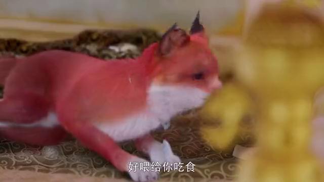 《枕上书》帝君,你怎么知道小狐狸会看字呀?