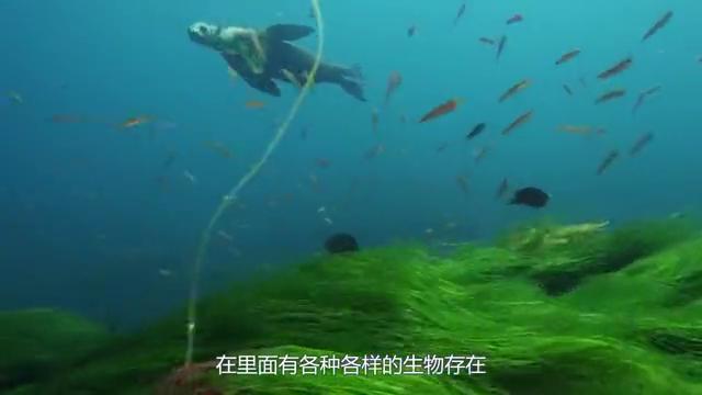 世界上价格最贵的捕鱼船,一次能打捞30吨鱼虾,生态平衡破坏者