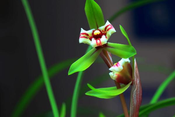 此花是中国十大名花之一,有淡雅高洁的气质,代表中华民族的精神