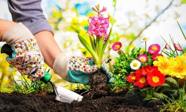 养花先养根,这种天然的钾肥不要钱,养根正当时