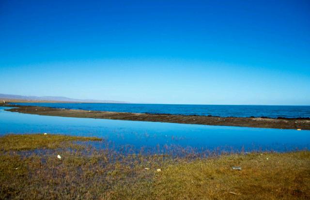 五月六月旅游去完青海湖,也可以去鸟岛呀,很壮观