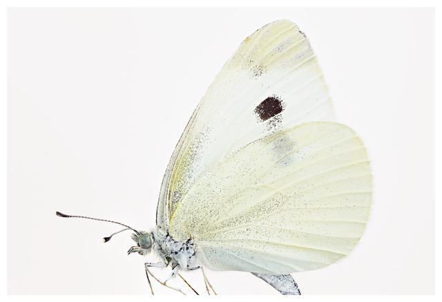 八年级上册《昆虫记》内容检测及答案(五)