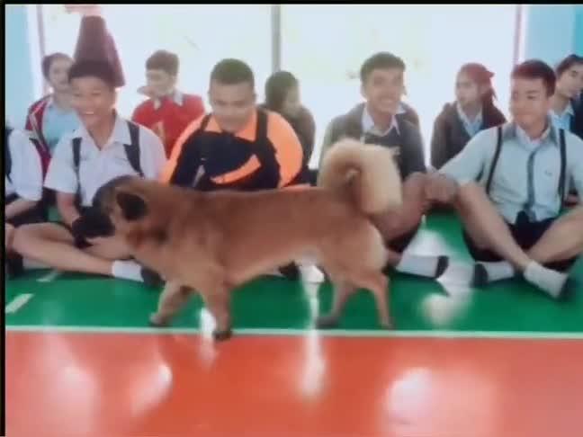 这是一个喜欢美女的毛孩子,狗:一群单身狗看好喽,标准的示范!
