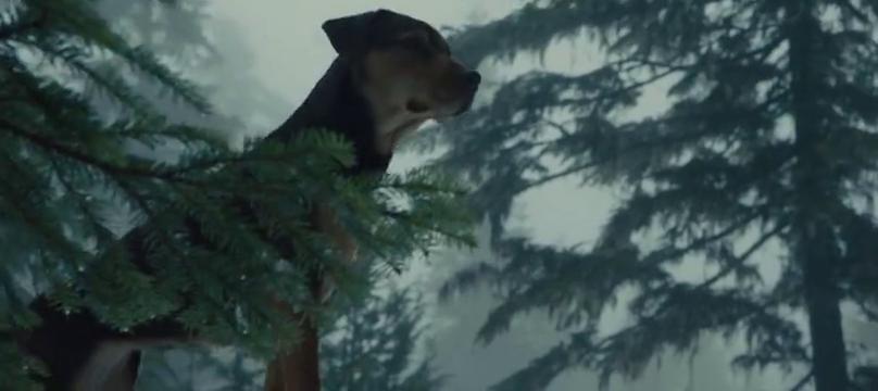 狗狗见美洲豹轻松过独木桥,他却有点不敢走,桥下就是万丈深渊