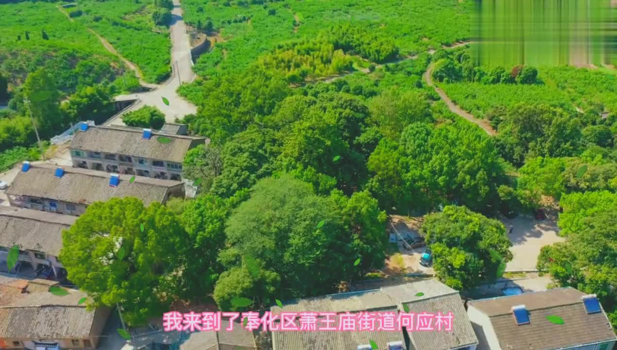 宁波第十处古树群,树生三竹,旁边还有天下第一桃园