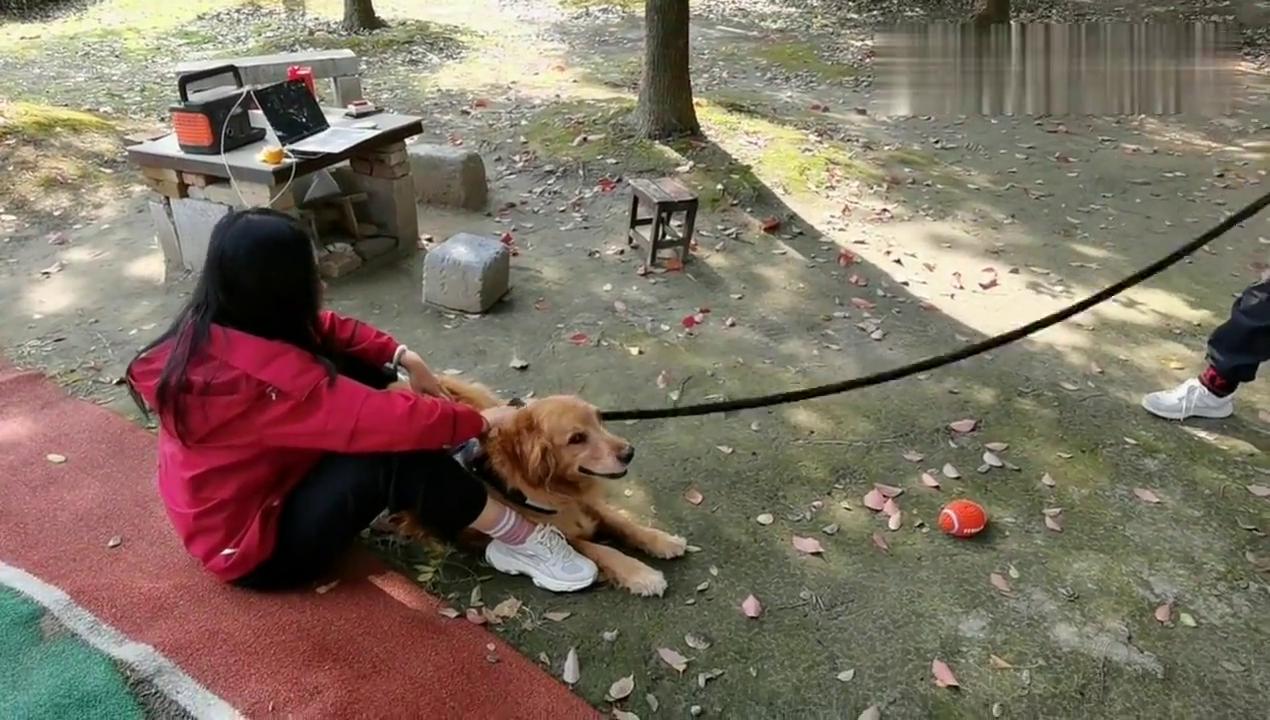 测试狗狗的忠诚度,朋友拿吃的逗大白,看会不会跟他走?