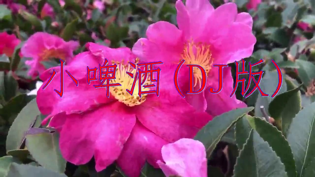 DJ何鹏、雷龙的一首《小啤酒(DJ版)》,歌声入耳,令人陶醉