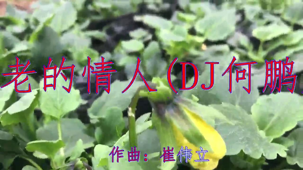分享小曼的经典歌曲《不老的情人(DJ何鹏版)》,歌声委婉陶醉