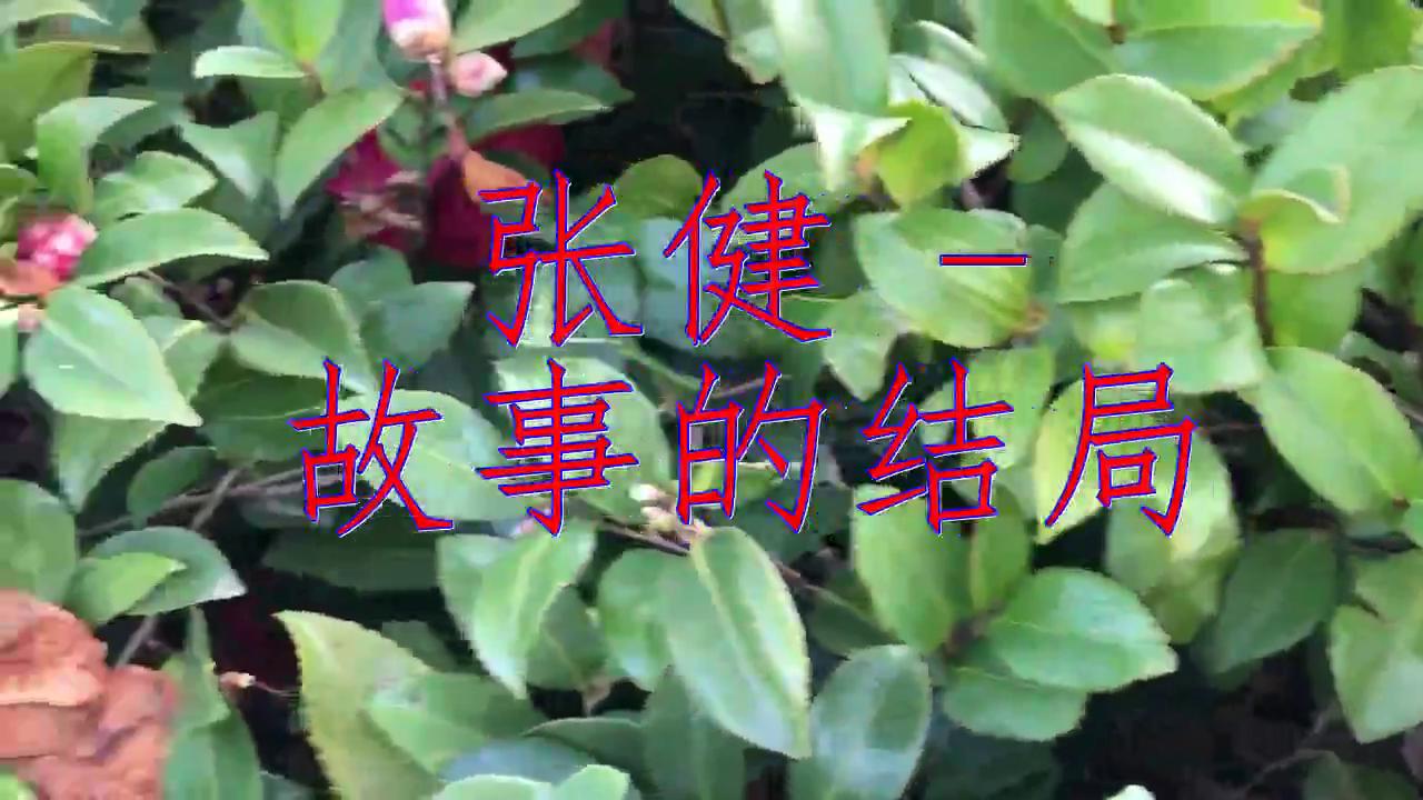 DJ何鹏的《张健 - 故事的结局》,歌声深沉有力,动人心扉