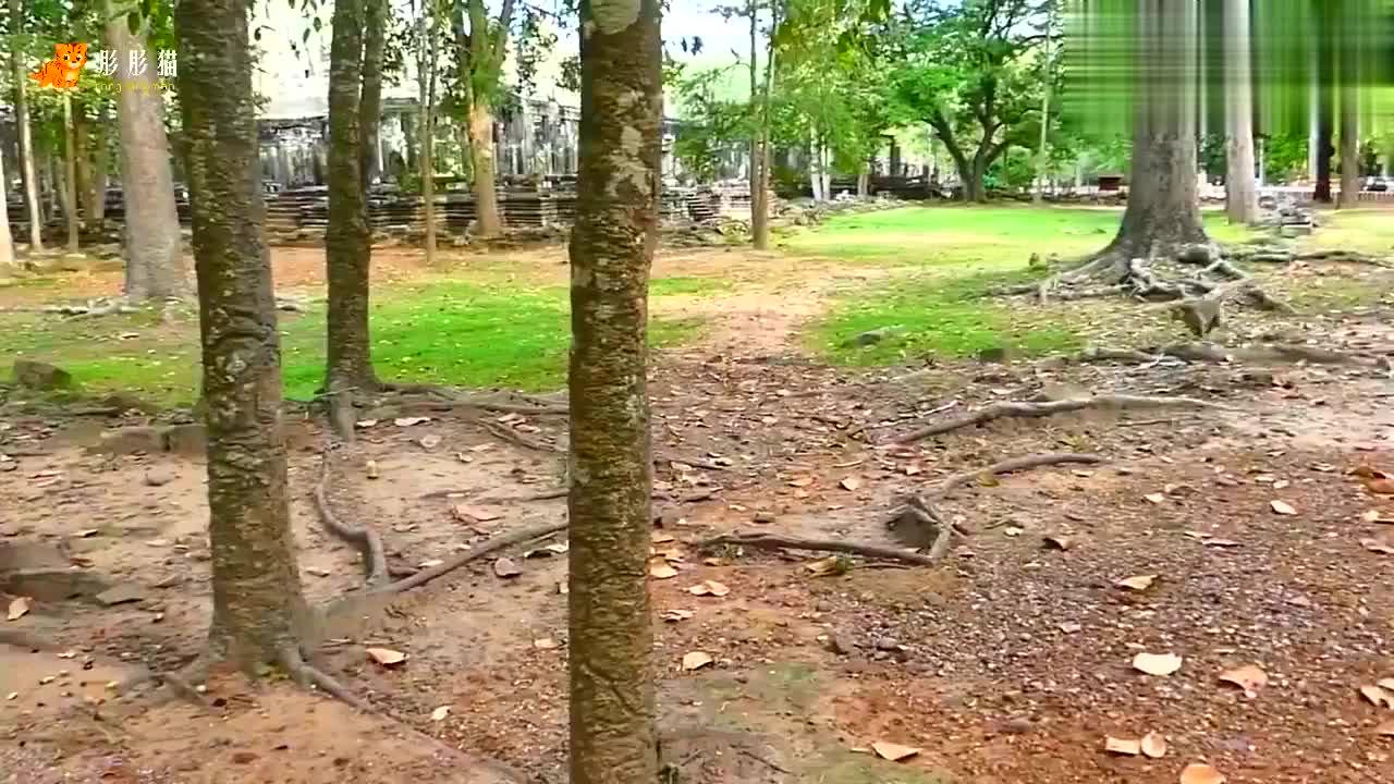 因为简对其他猴子大喊大叫,两只大公猴毫不留情地攻击了母猴简