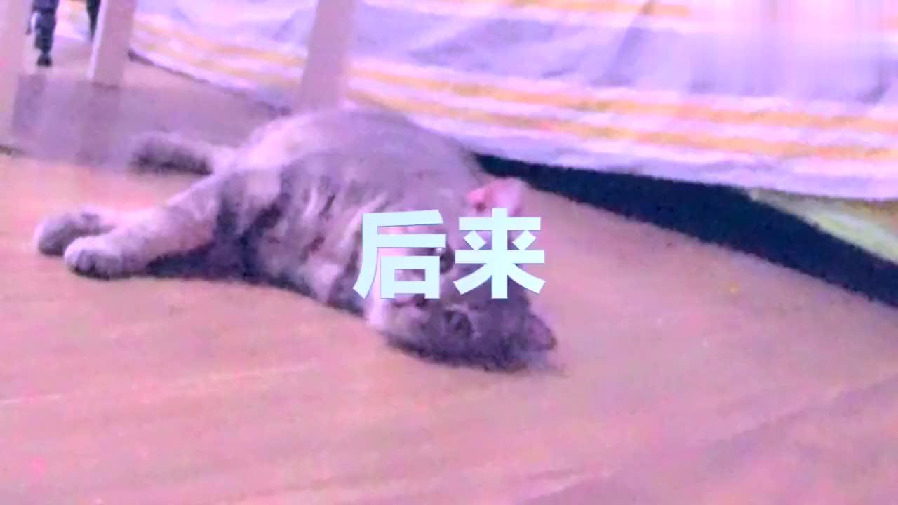 一只猫的独白:你以为纸箱真的能够诱惑我?