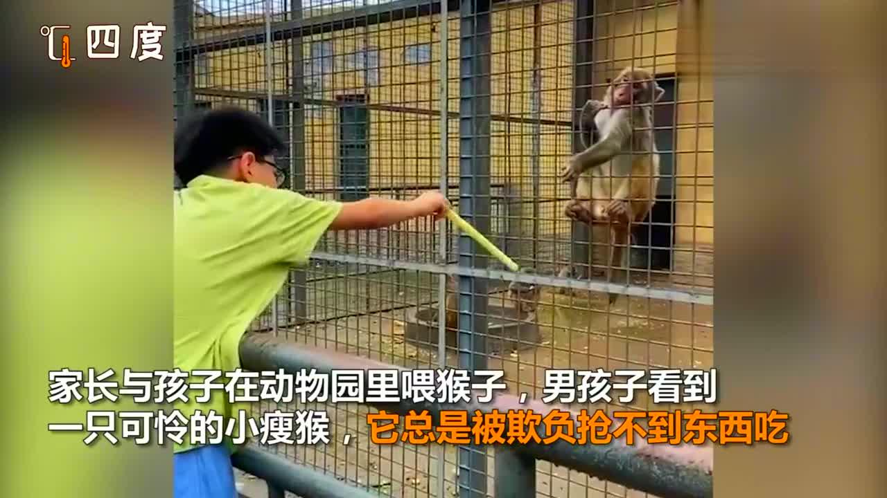 瘦弱猴子被欺负抢不到食物,男孩等其他猴子离开后悄悄给它