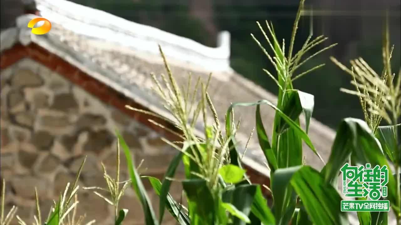 黄磊让巴图搭鸡窝,巴图却开始研究木工大全,把黄磊逗乐了!