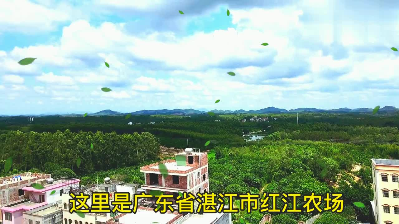 航拍湛江市廉江市红江农场,红江橙的原产地,这里的水果全国闻名